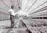 Unsworth Greenhouses, Plains Road West,