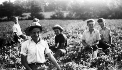 Picking peas on the Bullock farm, ca 1930s.