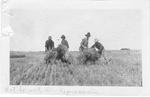 Art Brame Sr. and co-workers stooking wheat in Saskatchewan, 1923