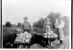 Bob and  Earl Klodt with an unidentified girl and little child in a melon field, with wheelbarrows full of melons, ca 1920
