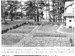 Vegetable garden at Pine Cove,  1912