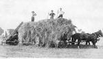 John Dudley Williamson -- Loading hay