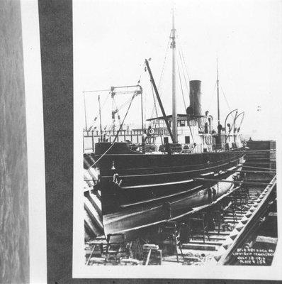 CROCUS (1904)