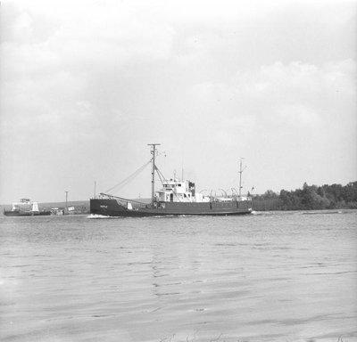 MAPLE (WAGL-234) (1939)