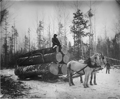 Horse Team Waiting To Haul Logs