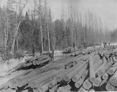 Log Piles in Alpena