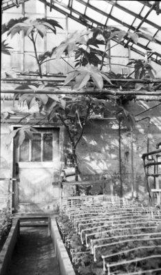 Linke's Greenhouse