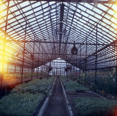 Linke's Greenhouse