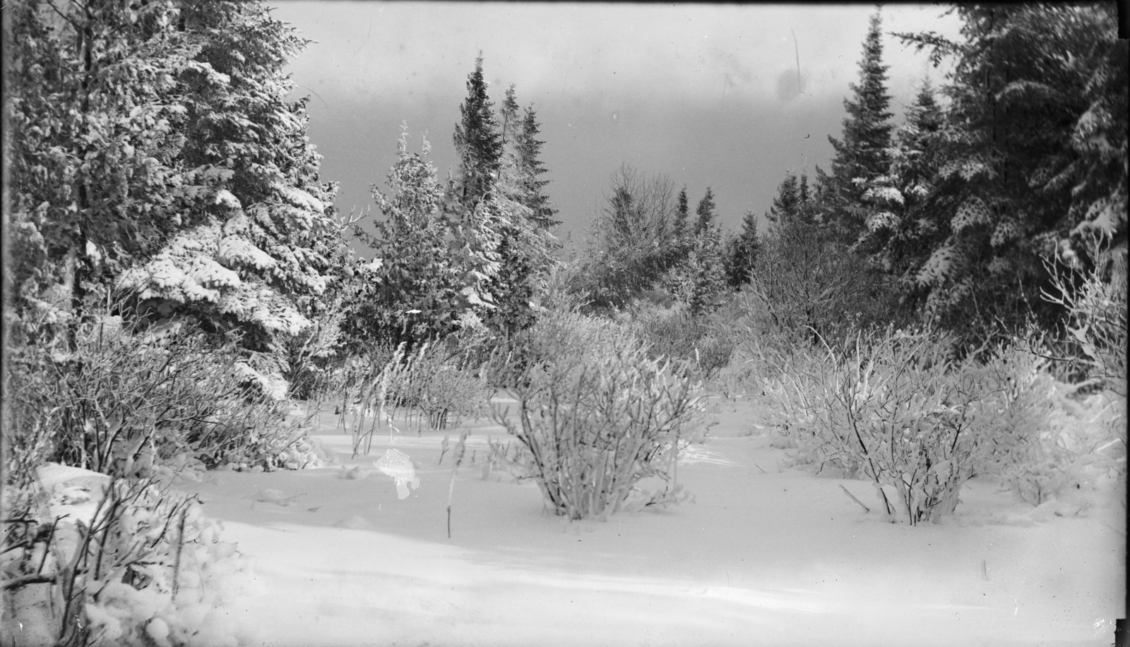 Middle Island:  Winter Woods