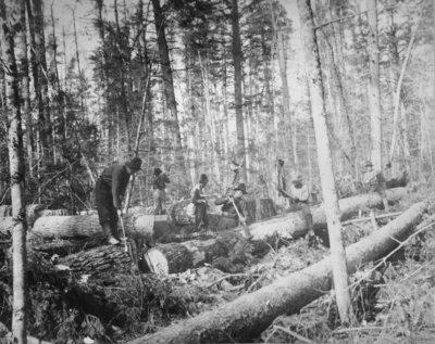Loggers Peeling Bark