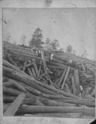 Log Jam at the Ox-Bow on the Thunder Bay River