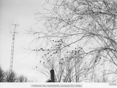 Birds on a Winter Morning
