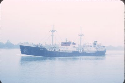 DIVINA (1951, Ocean Freighter)