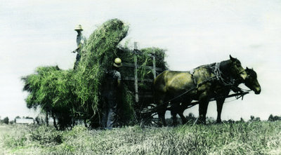 Loading a Hay Wagon in the 1930's