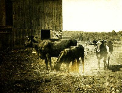 Spring Valley Farm Postcard