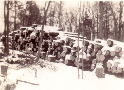 Stacks of Logs, Arthur and Harry Marsden's Farm, circa 1930