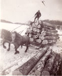 Horse-drawn Logging Sled at Marsden's, circa 1930