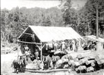 Constructing a Building at the Lumber Camp, circa 1920