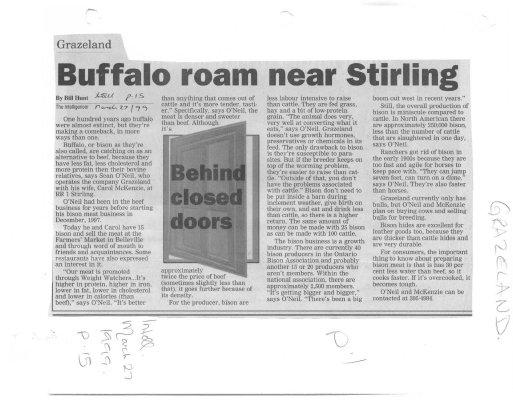 Buffalo Roam Near Stirling