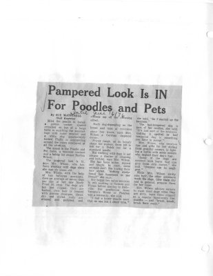 Pampered Look is in for poodles and pets
