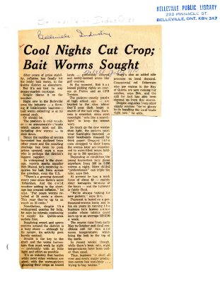 Cool Nights Cut Crop; Bait Worms Sought