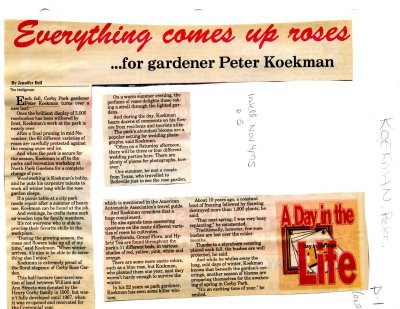 Everything comes up roses... for gardener Peter Koekman
