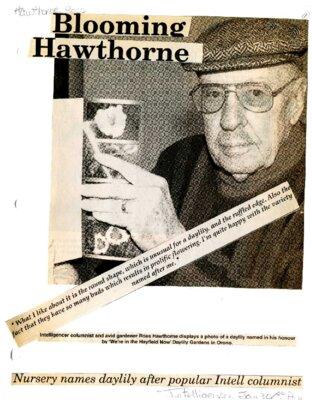 Blooming Hawthorne