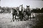 Horse Team in Orrville