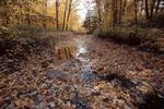 Sawmill creek Mississauga Ontario