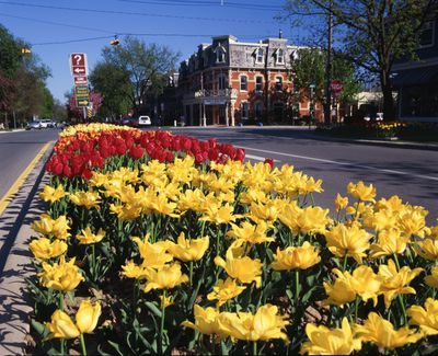 Ontario: Niagara-on-the-Lake - tulips and lillies add colour to Queen Street, Prince of Wales Hotel in background