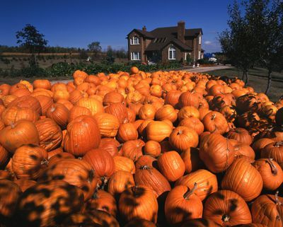 Ontario: Georgetown area - harvested pumpkins in front of modern farmhouse