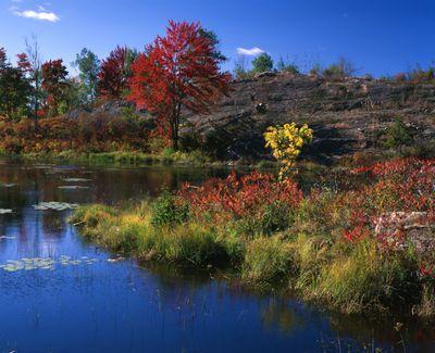 Ontario: Kaladar area - Fall colouring alongside No.& Highway