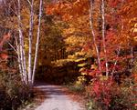 Ontario: Muskoka- country lane in October