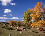 Ontario: Madoc- Perth area- pastoral scene near Mississippi Lake in the fall