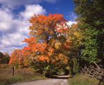 Ontario: Rideau Lakes- road to farm on Crosby Lake near Westport