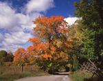 Ontario: Rideau Lakes- road to farm on Crosby Lake, near Westport