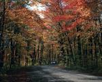 Ontario: Algonquin Park-side road at height of Fall colouring