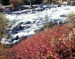 Photograph of rushing water at creek