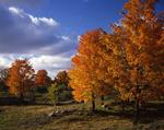 Ontario: Perth-Madoc area - typical countryside in autumn near Tweed