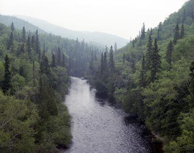 Steel River Aerial of Steel River winding between trees