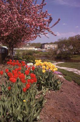 Spring on the Scugog park scene, Lindsay