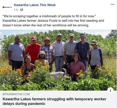 April 28: Kawartha Lakes farmers struggling with temporary worker delays during pandemic