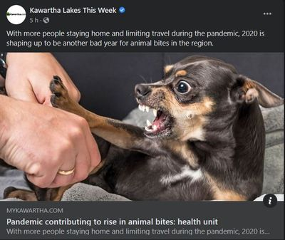 September 15: Pandemic contributing to rise in animal bites - health unit