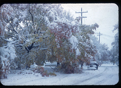 An October snowstorm in Blenheim, Chatham-Kent