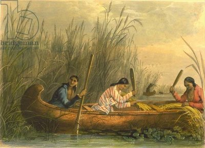 Exhibit, Gathering Wild Rice by Charles Eastman