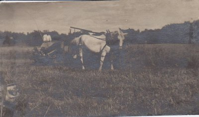 Man working the field with two horses