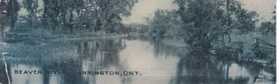 Book postcard of Beaver River, Cannington, Ont.