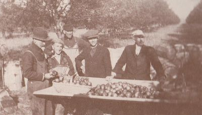 Photograph of apple harvesting, Colborne, Cramahe Township