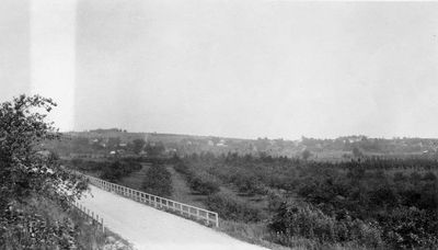 Photograph of apple orchards outside Colborne, Ontario, Cramahe Township, 1923-1924