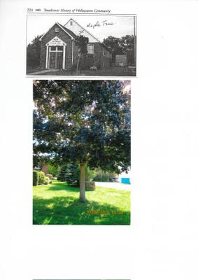 Memorial Maple Tree- Wallacetown W I